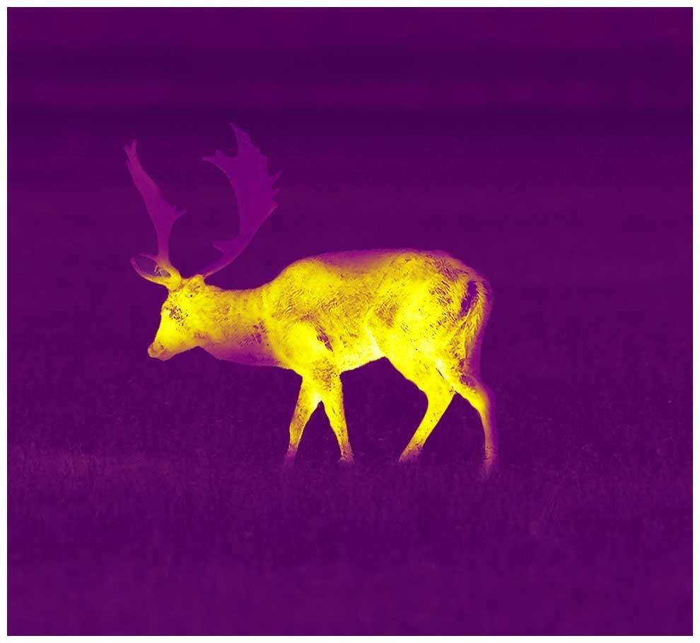 crop_990x910_violet